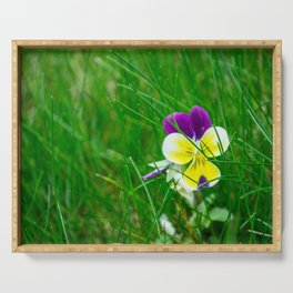 Viola tricolor, heartsease in the grass field Serving Tray