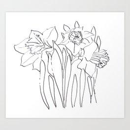Daffodil Sketch Art Print