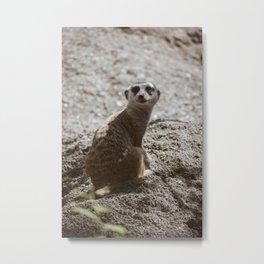 Spooked Meerkat Metal Print