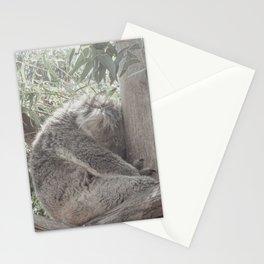 Australian Koala Resting on the wooden limbs   Travel Photography Stationery Cards