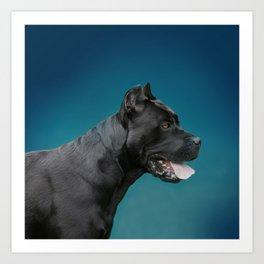 Cane Corso - Italian Mastiff Art Print