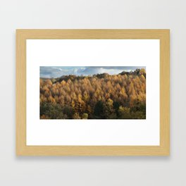 Larch Cottage Panorama Framed Art Print