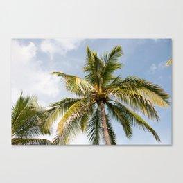 Bahamas Palmtree Canvas Print