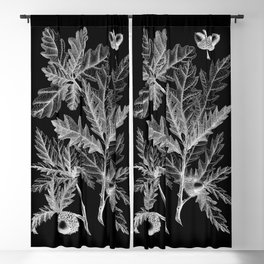 Mighty Oak Leaves Vintage Illustration Blackout Curtain