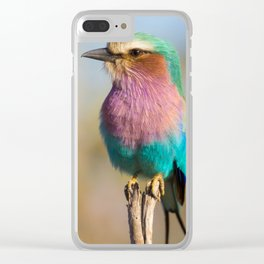 Lilac Breasted Roller Clear iPhone Case