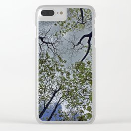 Tree canopy in the spring Clear iPhone Case