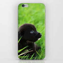 Shelter Puppy iPhone Skin