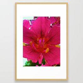 Kapok Flower Framed Art Print