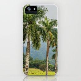 Hawaii Palm Tree Road In Fog iPhone Case