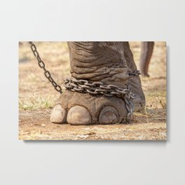 leg of an elephant Metal Print