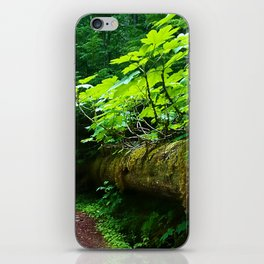 A path to an adventure iPhone Skin