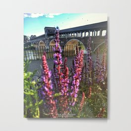 Lavenders in the river, Pavia Italy. Metal Print