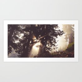 dawn in the day Art Print