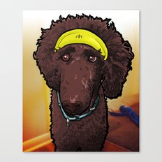Hobbes (poodle) Canvas Print