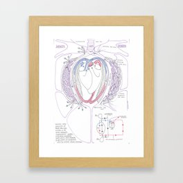 Avian Respiratory System with Heart, Colour Framed Art Print