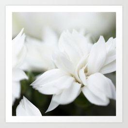 Snow White Flowers on a Dark Background #decor #society6 #buyart Art Print