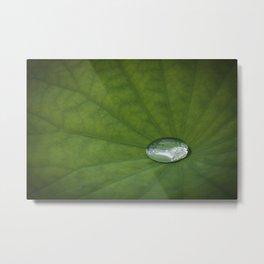 Water Drop on a Leaf Metal Print