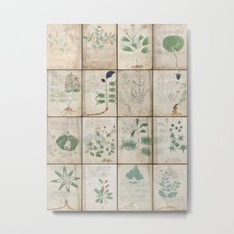 The Voynich Manuscript Quire 1 - Natural Metal Print