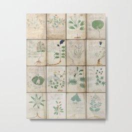 The Voynich Manuscript Quire 1 - Natural Metal Print