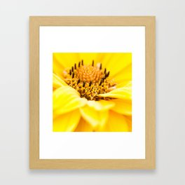 Yellow beauty Framed Art Print