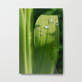 Raindrops on a green leaf Metal Print