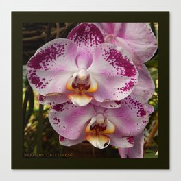 Pink Orchid Blossom from Mexico Canvas Print