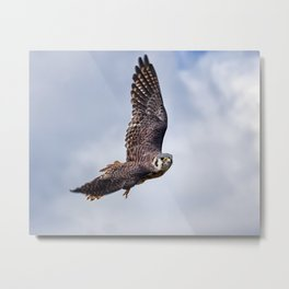 Fly High. Fly Free. Metal Print