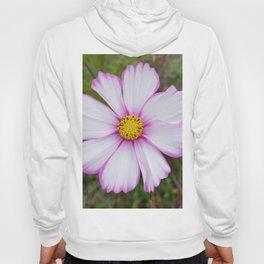 Winter Cosmos Flower in Pink 7 Hoody