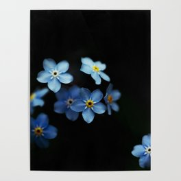 Forget Me Nots on Black Poster