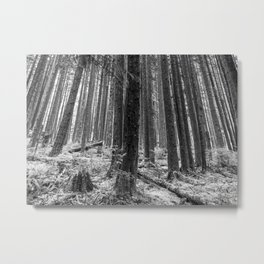 North Forest Metal Print