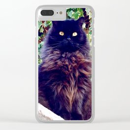 The King of cats Pomponio Mela Clear iPhone Case