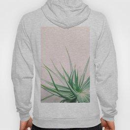 Minimal Aloe on pink background - Aloe Photography Hoody