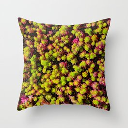 Pink and Green Succulents Throw Pillow