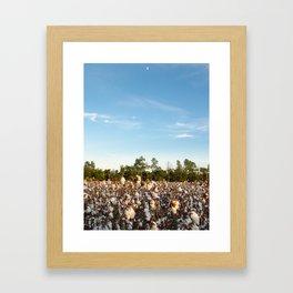 Cotton Field 16 Framed Art Print
