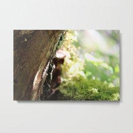 summer woods Metal Print