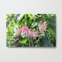 Pink and Green Medinilla Tropical Flower Metal Print
