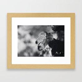 Autumn Grape Leaf in Black and White Framed Art Print