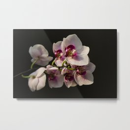 Orchid Branch Metal Print