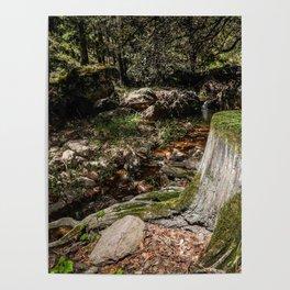 Tree Die Poster