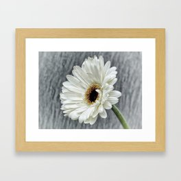 Fresh As A Daisy Framed Art Print