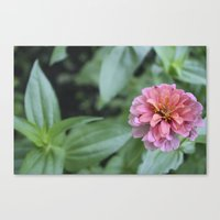 rileigh smirl Canvas Prints featuring Pink Flower by Rileigh Smirl