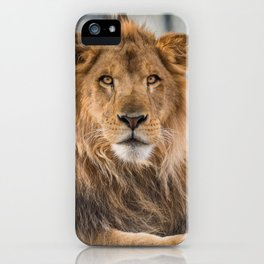 Lambert the Lion All Grown Up iPhone Case