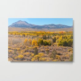 Inyo Forest Metal Print