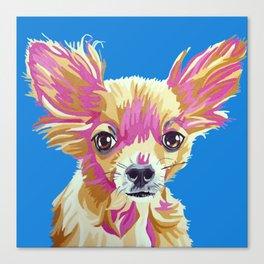 Lucas the chihuahua Canvas Print