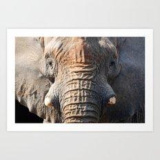African Elephant 1 Art Print
