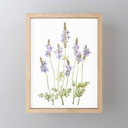 purple fernleaf lavender watercolor Framed Mini Art Print