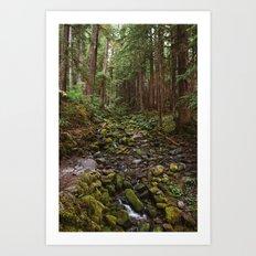 Mossy Creek through the Woods Art Print
