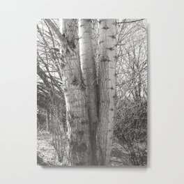 Triplets Metal Print