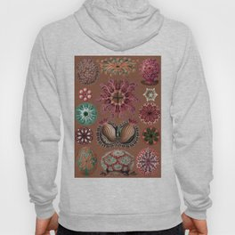 Ernst Haeckel Ascidiae Sea Squirts Earth Tones Hoody