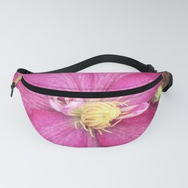 Clematis Fanny Pack